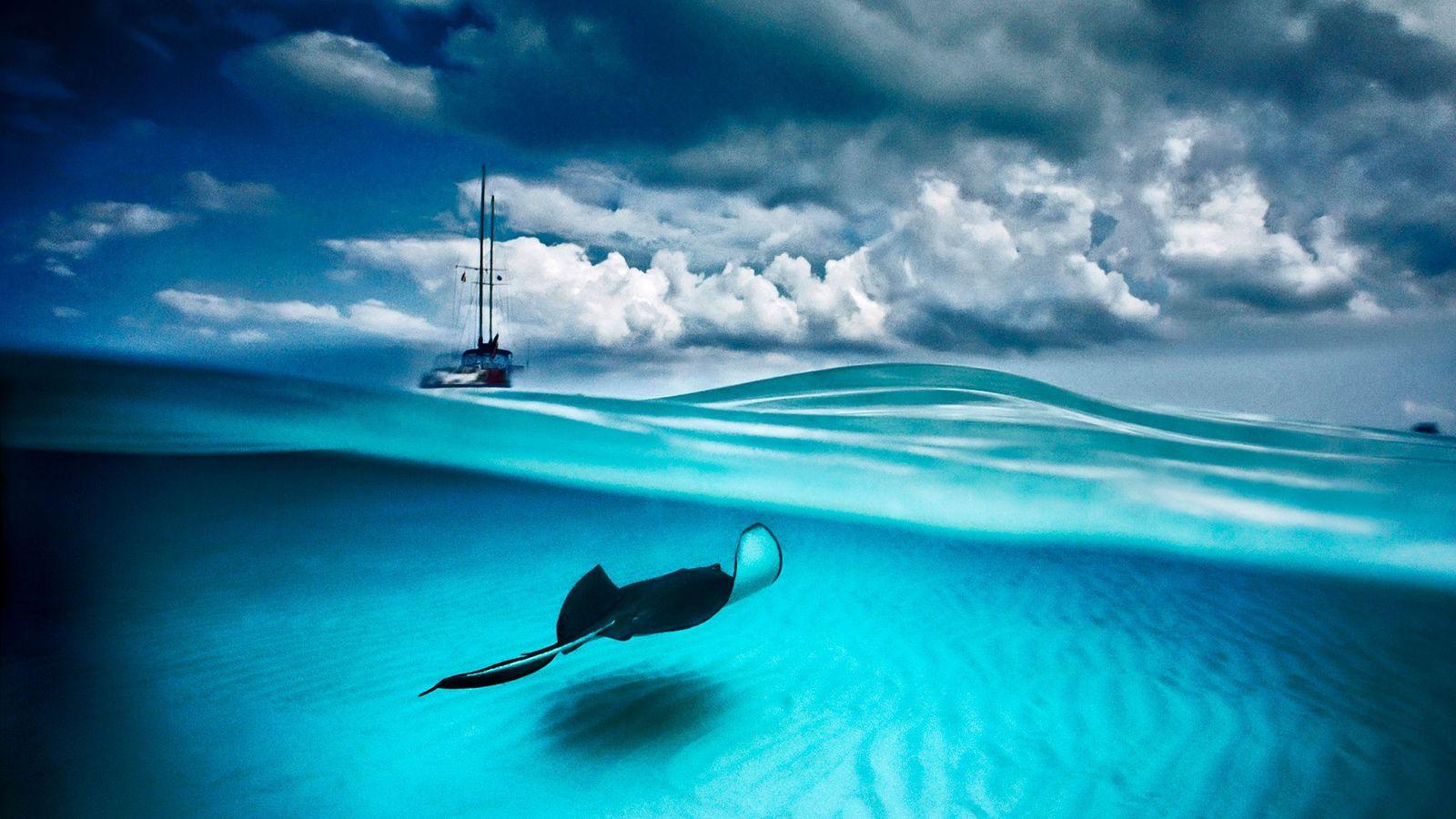 Im North Sound der Insel Grand Cayman sind ein Stachelrochen und ein Segelboot zu sehen. Die ...