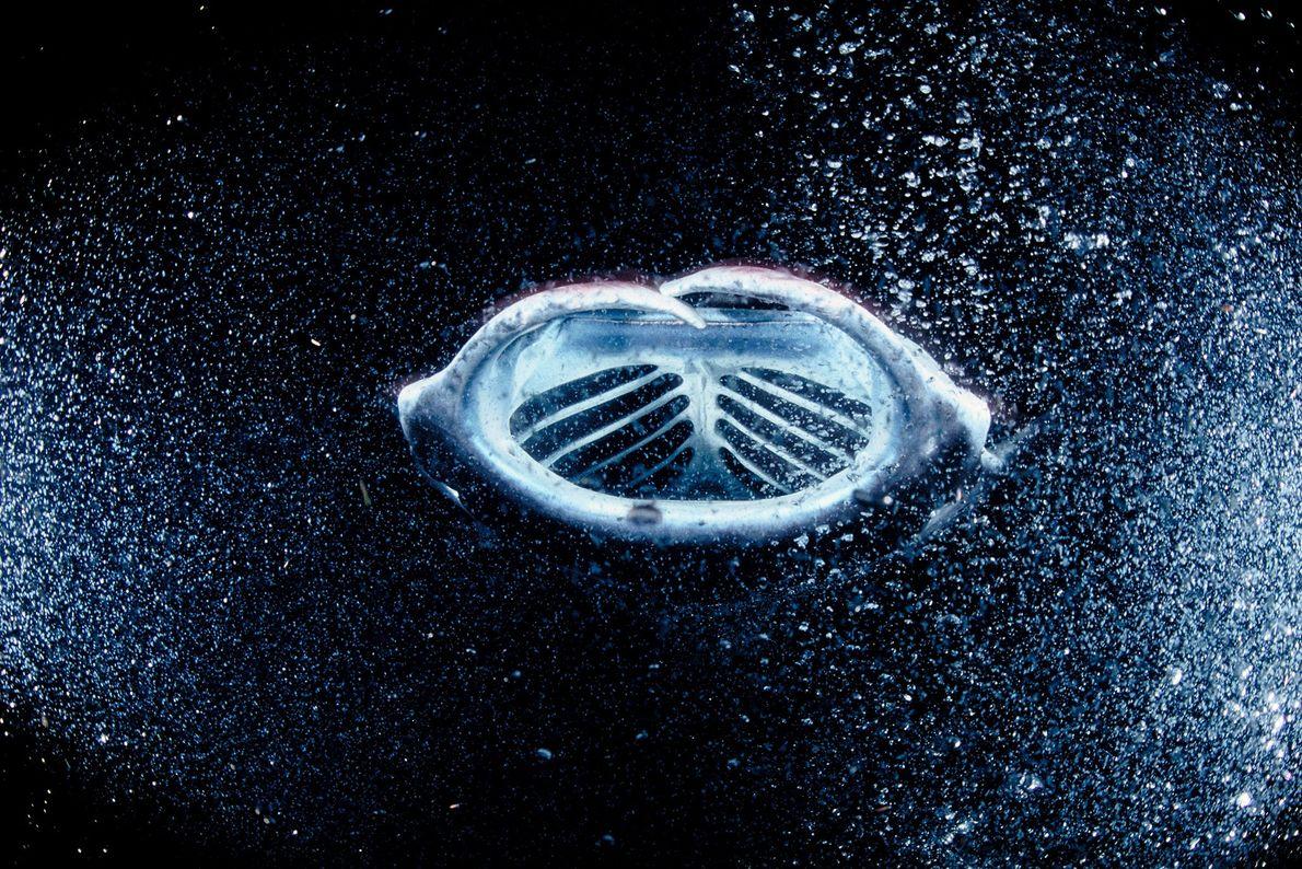 Ein Mantarochen frisst sich durch eine scheinbare Galaxie aus Plankton, das von Unterwasserscheinwerfern angezogen wird. In ...
