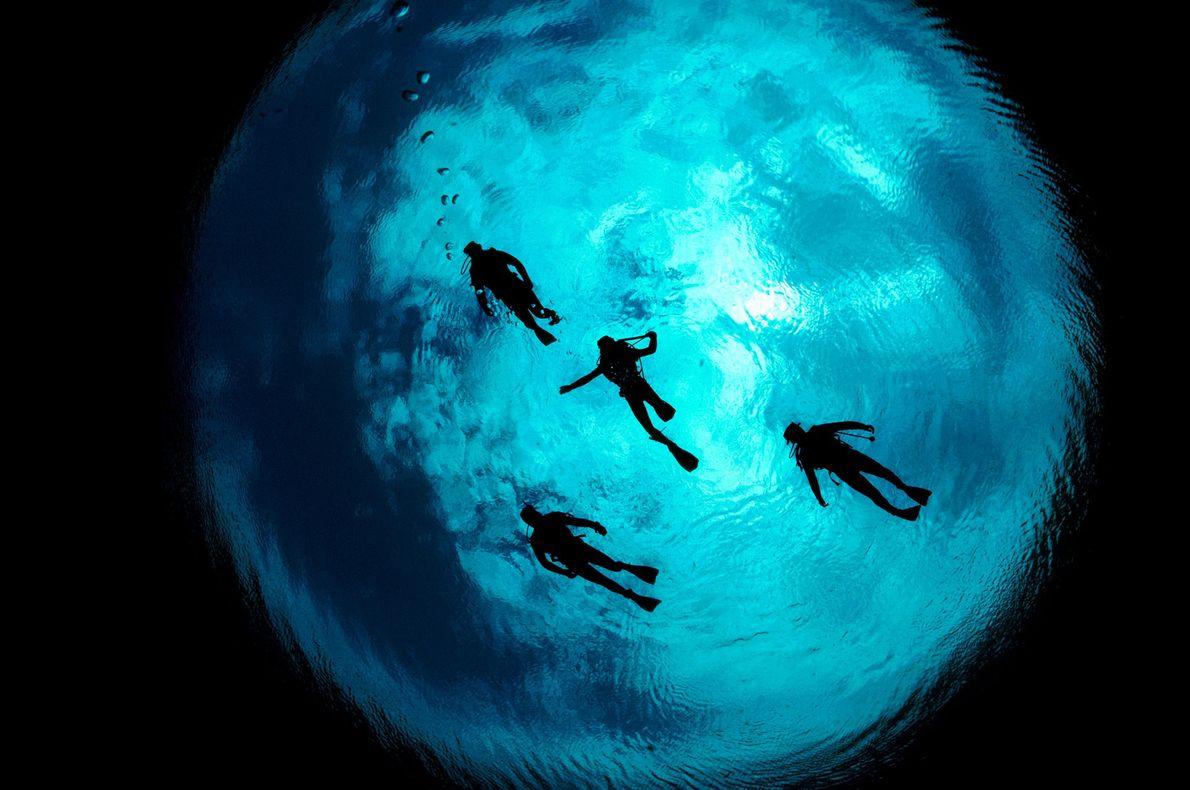 Vier Taucher schwimmen im Ewens Pond südlich von Mount Gambier in Australien.