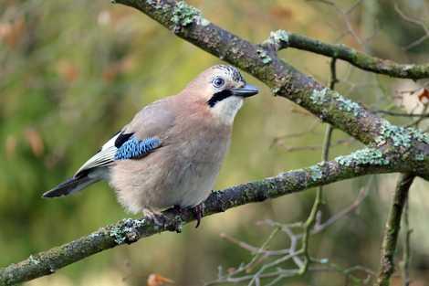 Galerie: Was sind Deutschlands häufigste Wintervögel?