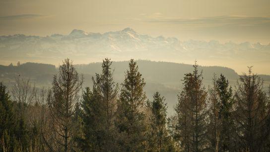 Deutschlands Wälder sind durstig. In den letzten paar Jahren ist der Grundwasserspiegel auf den niedrigsten Stand ...