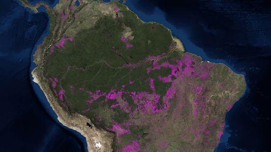 Waldverlust: Karte zeigt den schwindenden Amazonas-Regenwald