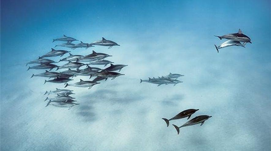 Die Sprache der Delfine: Wir müssen reden