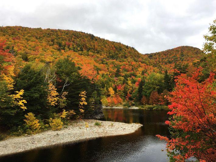 Die Bäume entlang des Cabot Trails auf der Cape Breton Island leuchten in ihrem Herbstkleid.