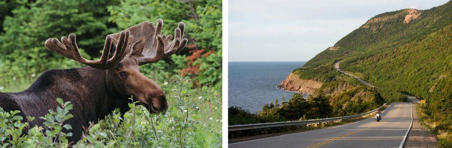 LINKS: Elche sind im Cape-Breton-Highlands-Nationalpark häufig zu sehen. RECHTS: Der Cabot Trail führt durch den Cape-Breton-Highlands-Nationalpark mit ...