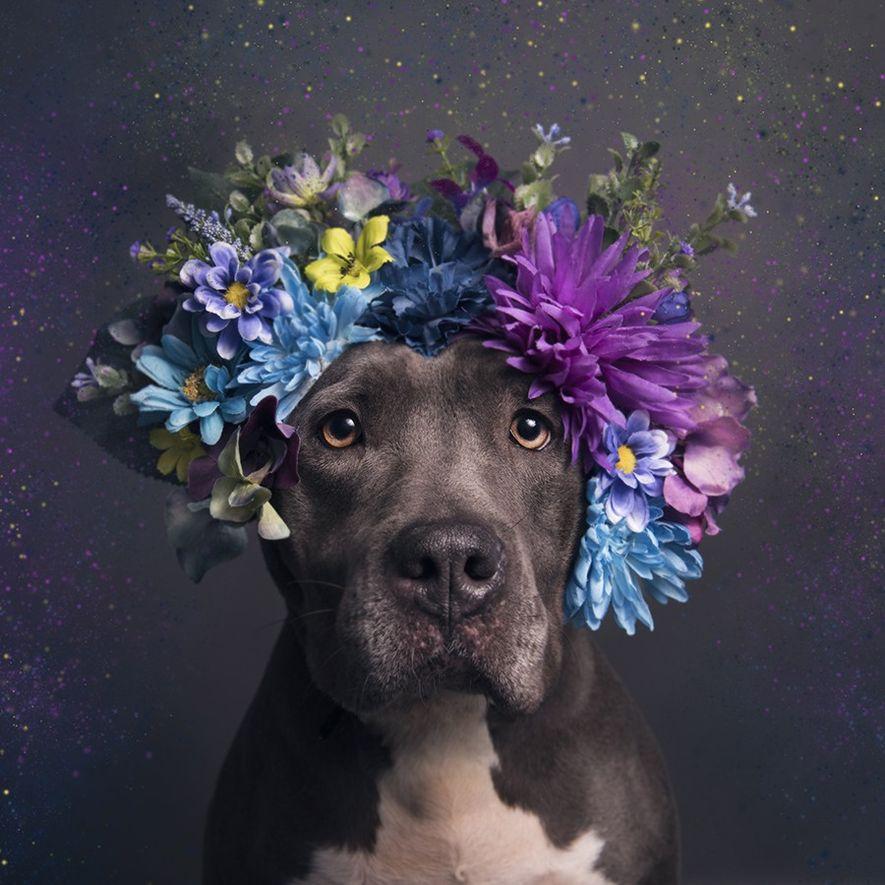 Destiny, kann aus dem Almost Home Animal Shelter in Pennsauken, New Jersey, adoptiert werden.
