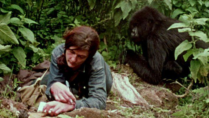 Ansehen: Seltene Aufnahmen enthüllen Dian Fosseys Leben mit Gorillas