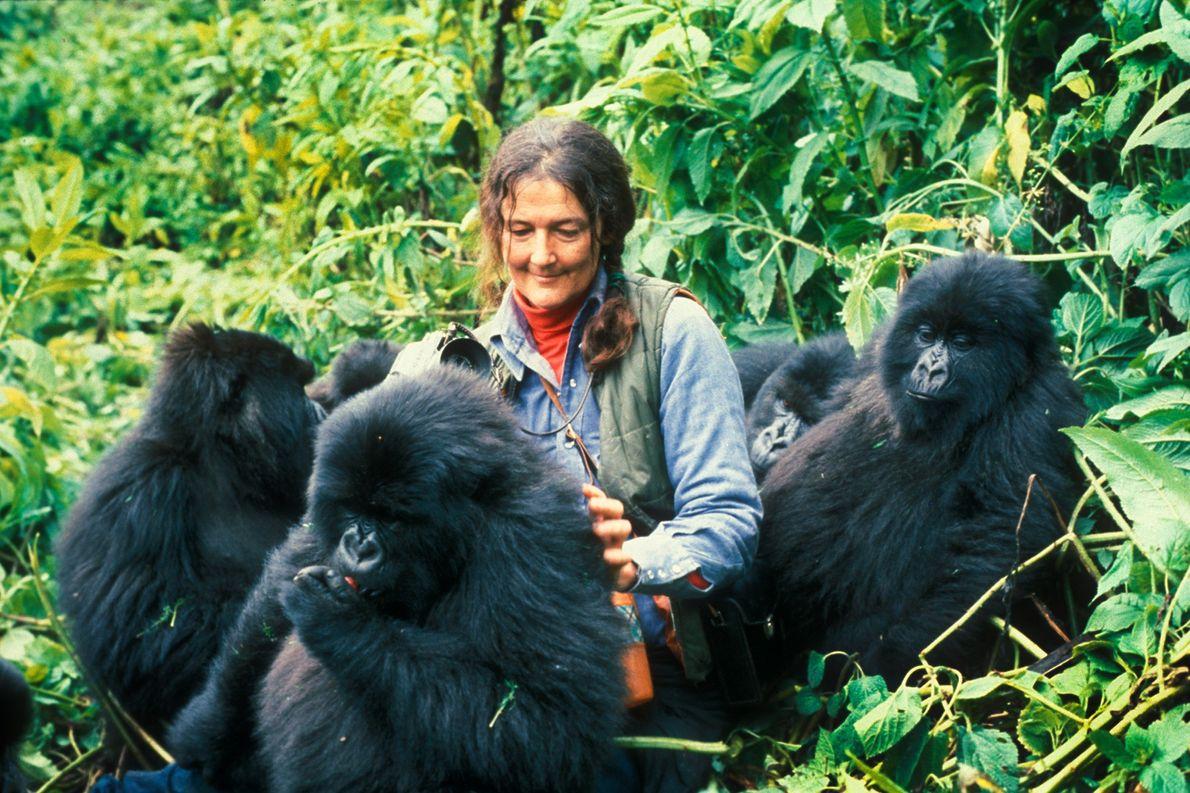 Diane Fossey und Gorillas