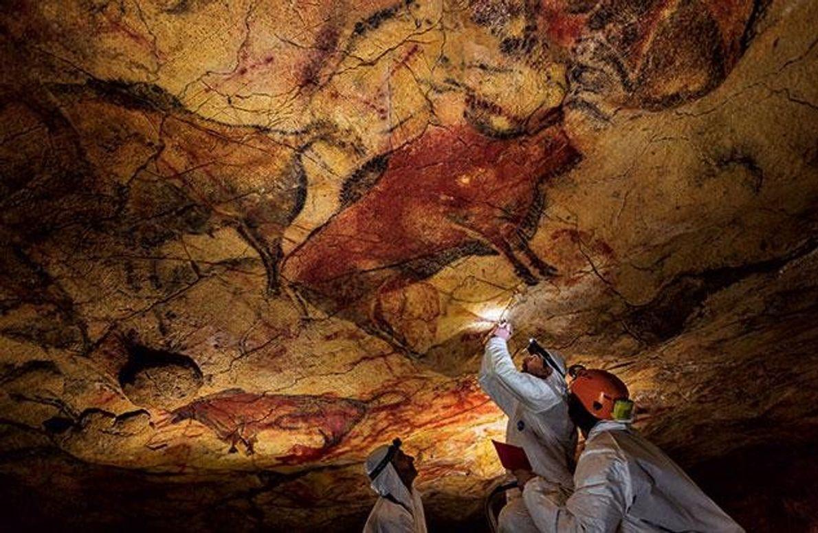 Anthropologen kratzen Proben von der vielfarbig bemalten Decke in der spanischen Altamira-Höhle. Die Tierbilder sind 15.000 …