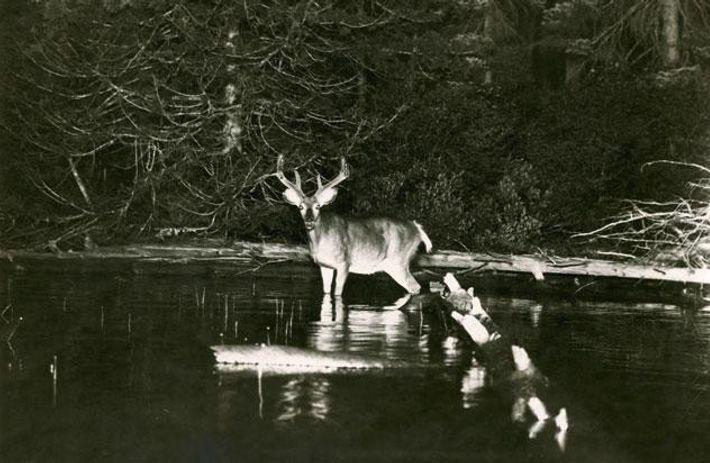 Die ersten Wildlife-Bilder bei NG