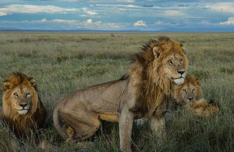 könig der löwen namen weiblich