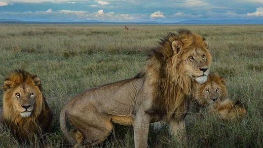 Fotostrecke: C-Boy, der König der Löwen