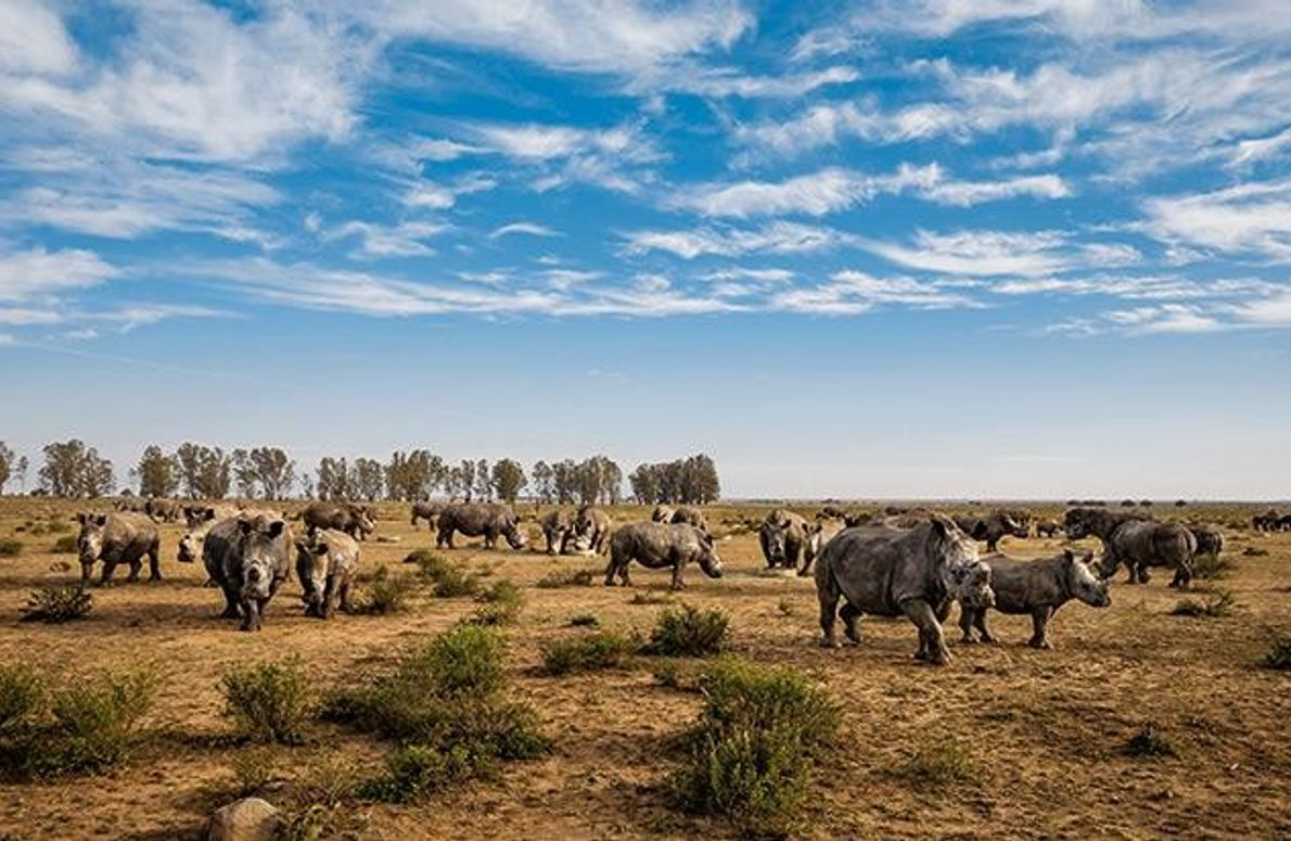 Die Nashorn-Farm