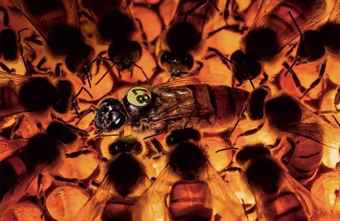 Die perfekte Biene