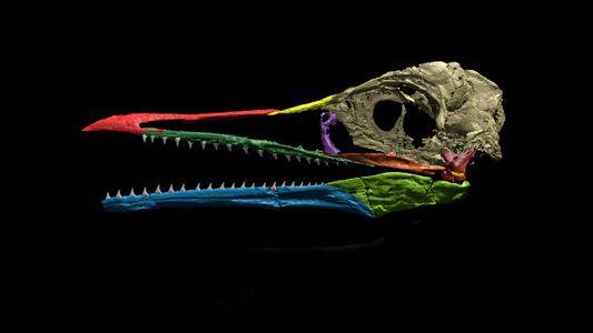 Erstaunlich intakter Schädel eines Urzeitvogels gefunden