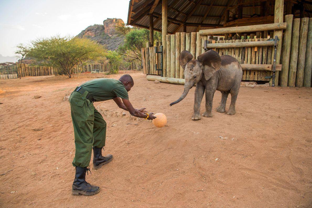 Lemojong spielt vor den Elefantengehegen Ball mit Poko
