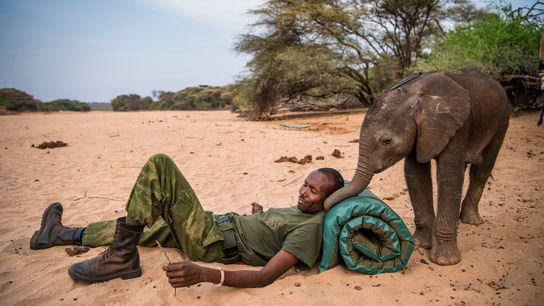 Samburu-Krieger haben dieses Elefantenbaby gefunden