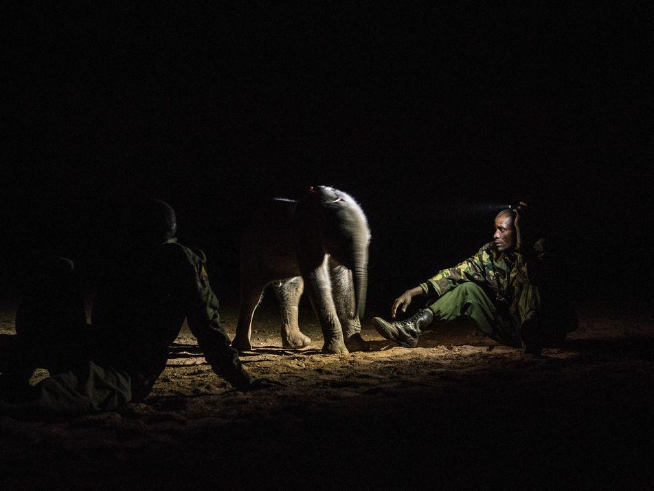 Galerie: Die Krieger, die einst Elefanten fürchteten, beschützen diese nun