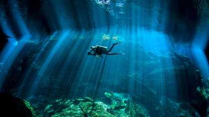 Galerie: Eine Fotoreise in die bunte Welt des Meeres