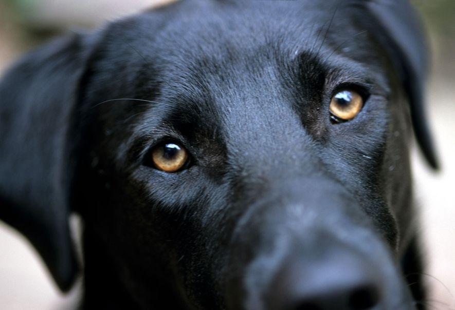 """""""Hundeblick"""" bietet einen evolutionären Vorteil"""