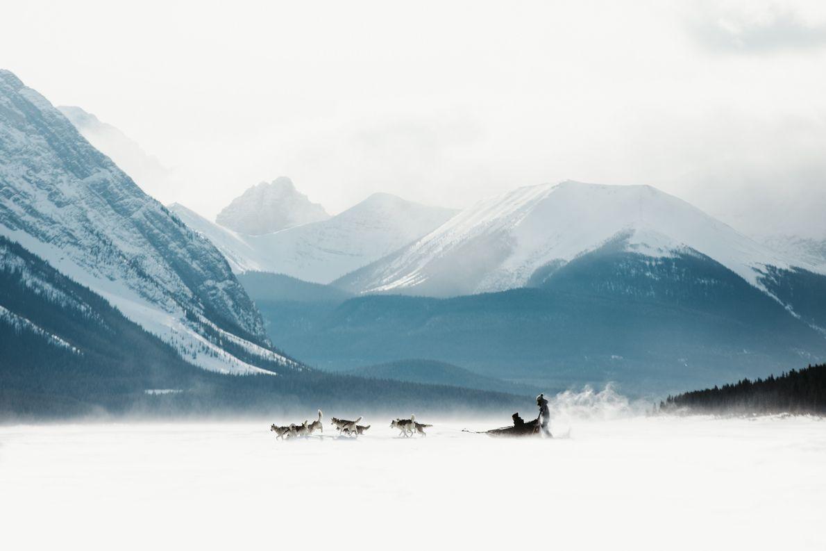Hundeschlitten im Banff Nationalpark in Alberta.