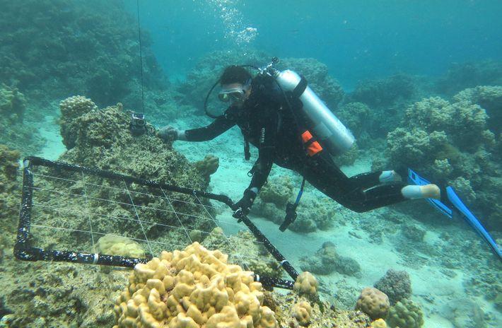 Korallekindergarten Französisch-Polynesien