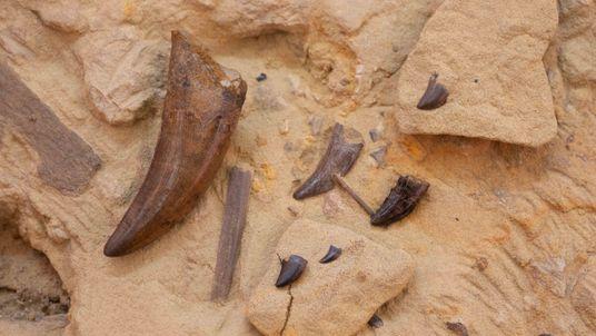 Dinosauriergrabung in Frankfurt: Forscher bergen hunderte Fossilien
