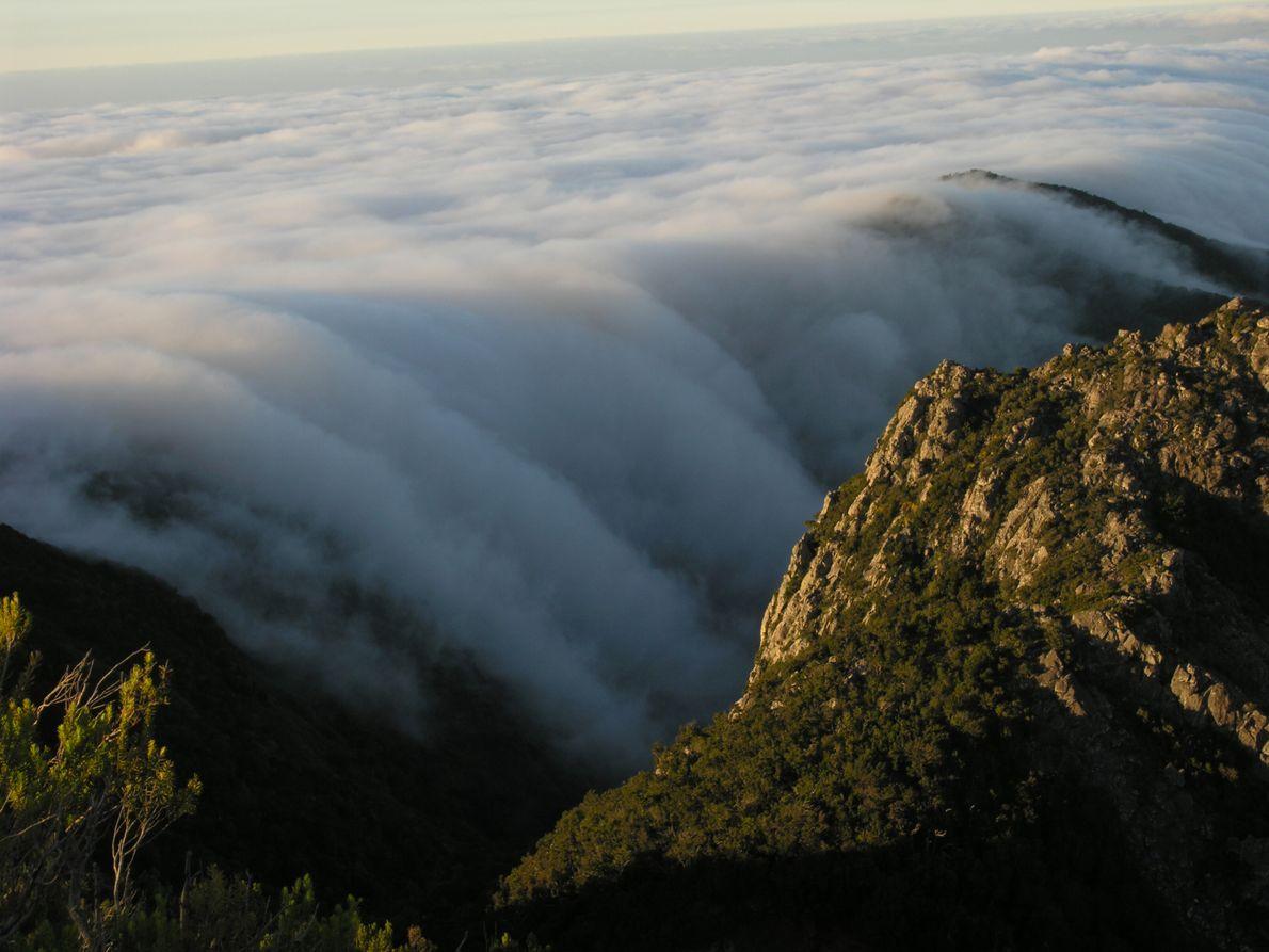 Wolkenmeere sind ein meteorologisches Spektakel - und auf La Gomera kann man diese oft beobachten.