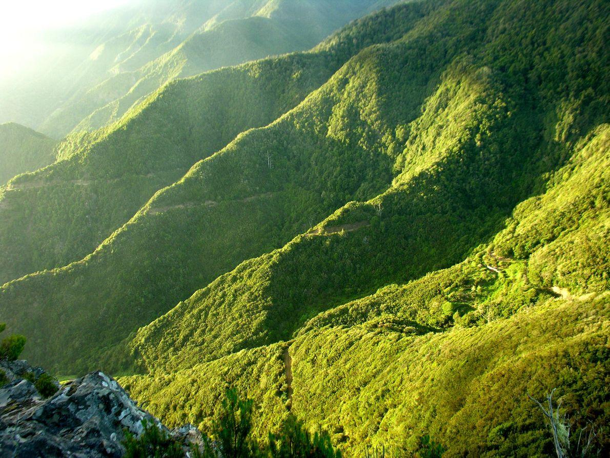Immergrüne Wälder und Gipfel sind typisch für die bergige Landschaft von La Gomera