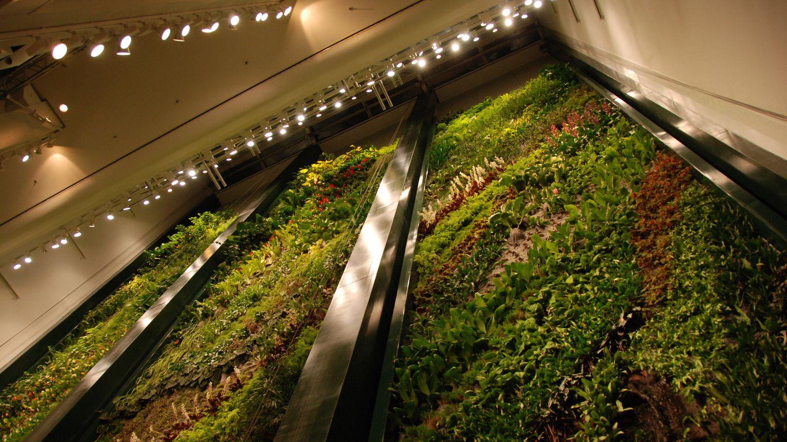 Indoor-Oase im Berliner Kulturkaufhaus Dussmann: Je vielfältiger die Pflanzenarten, desto widerstandsfähiger ist die Anlage gegen Krankheiten.