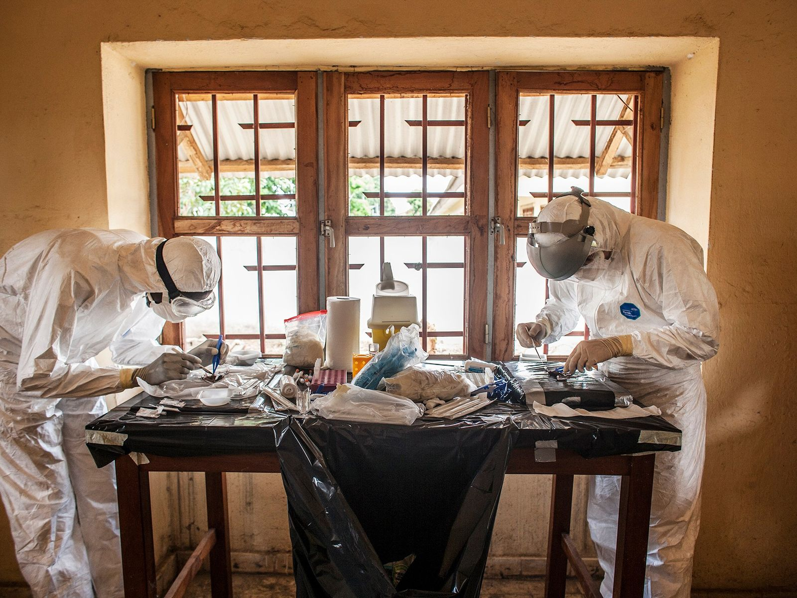 In einem provisorischen Labor führen zwei Ärzte Nekropsien an Fledermäusen durch.