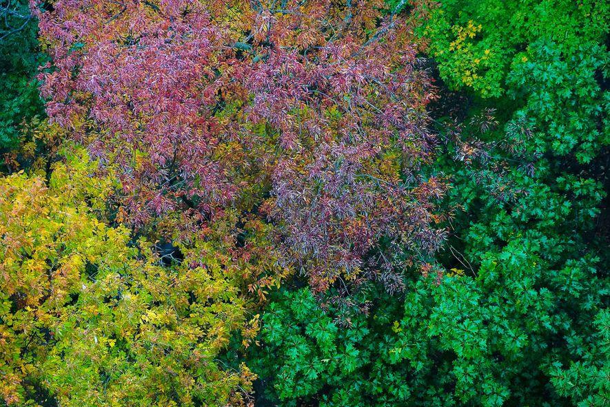 Muskokas Wälder