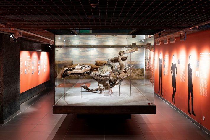 Edmontosaurier-Mumie in Frankfurt