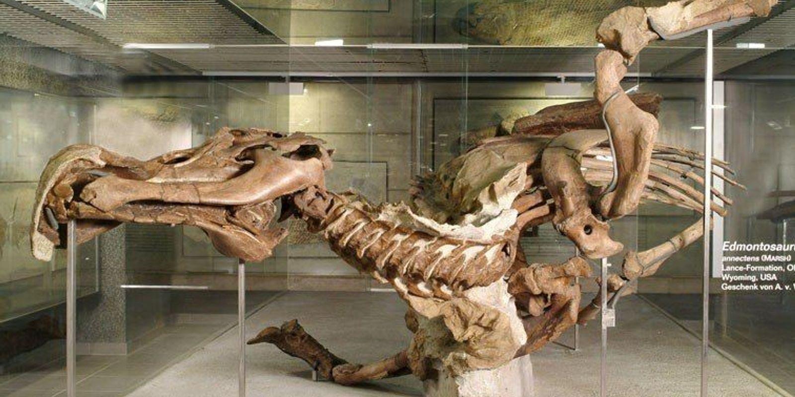Das Geheimnis der Senckenberg-Mumie: Wie ein Dino die Forschung an der Nase herumführte