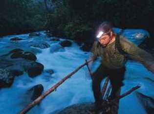 Die aufgehende Sonne beleuchtet auf der Insel Wokam südlich von Neuguinea die Balz eines Großen Paradiesvogels. ...