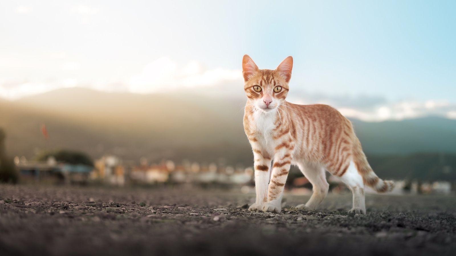 Katze verändert ihre Fellfarbe