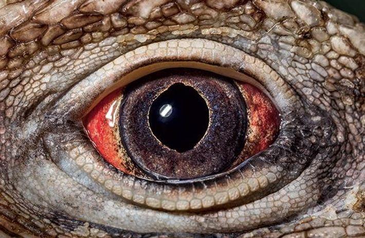 Ein anderes Auge erzeugt eine andere Welt