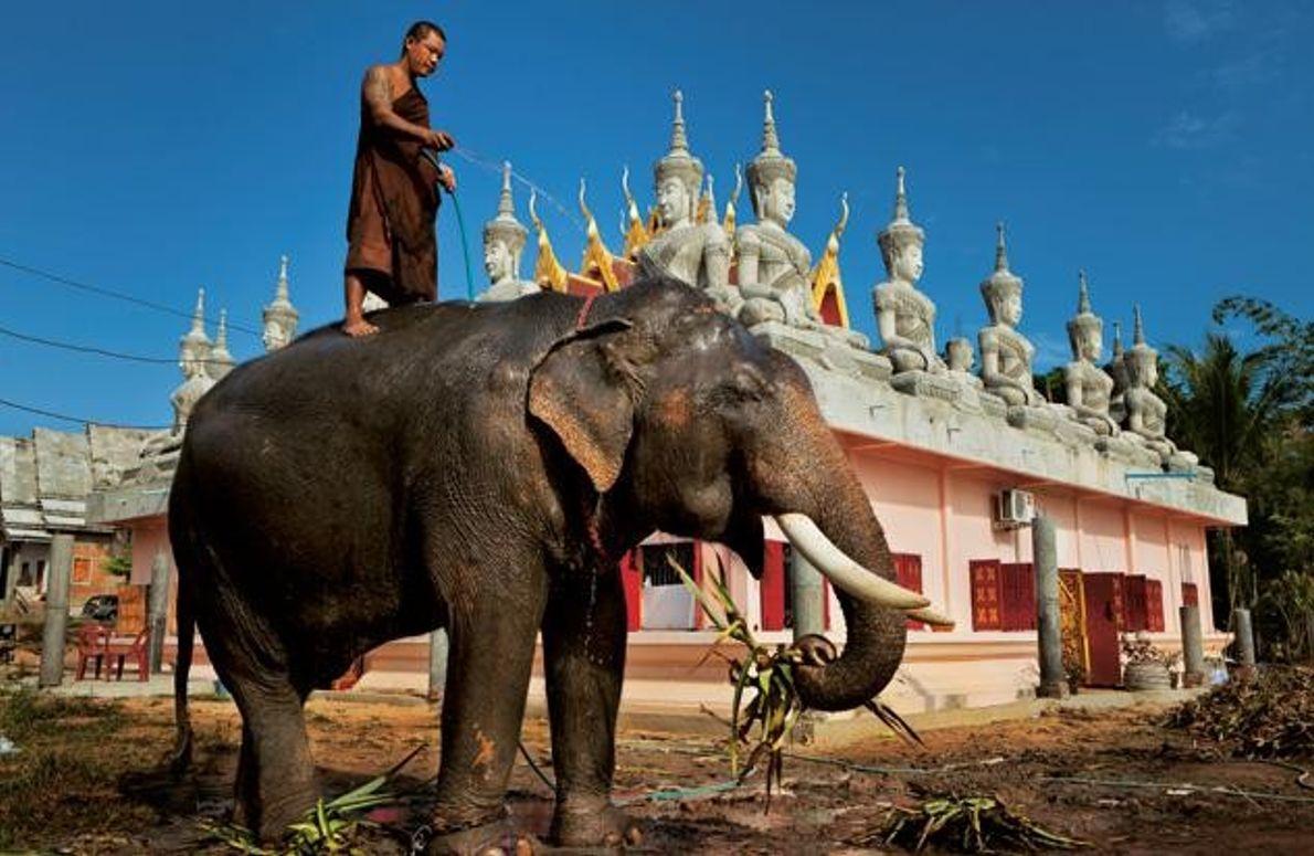 Elefant im einem Tempel in Thailand