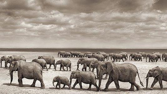 Lebenslang verstörte Elefanten