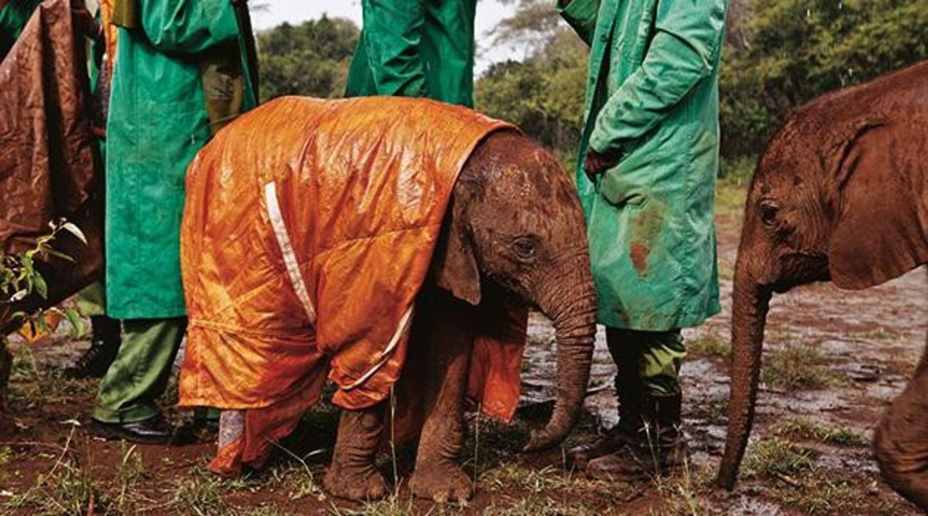 2011 fotografierte Michael Nichols dieses Elefantenjunge in einem Waisenhaus in Nairobi.