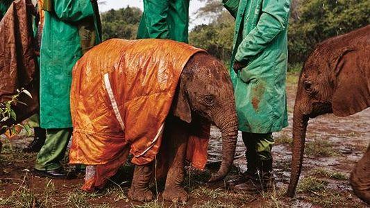 Ein Elefantenjunges im Waisenhaus