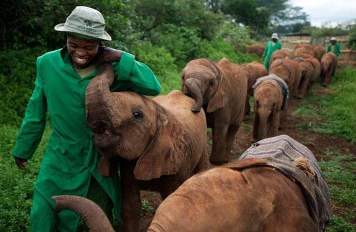 Elefantenwaisen und ihre Pfleger