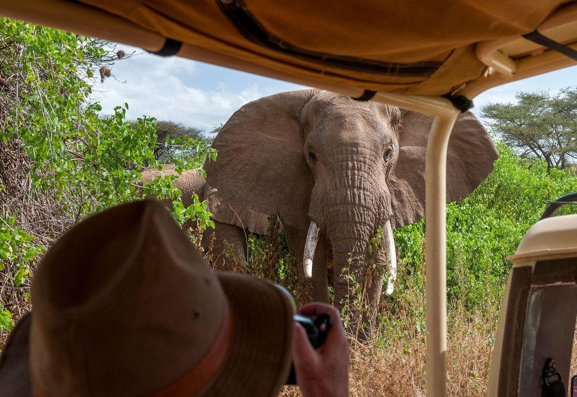 Elefant nähert sich einem Fotografen
