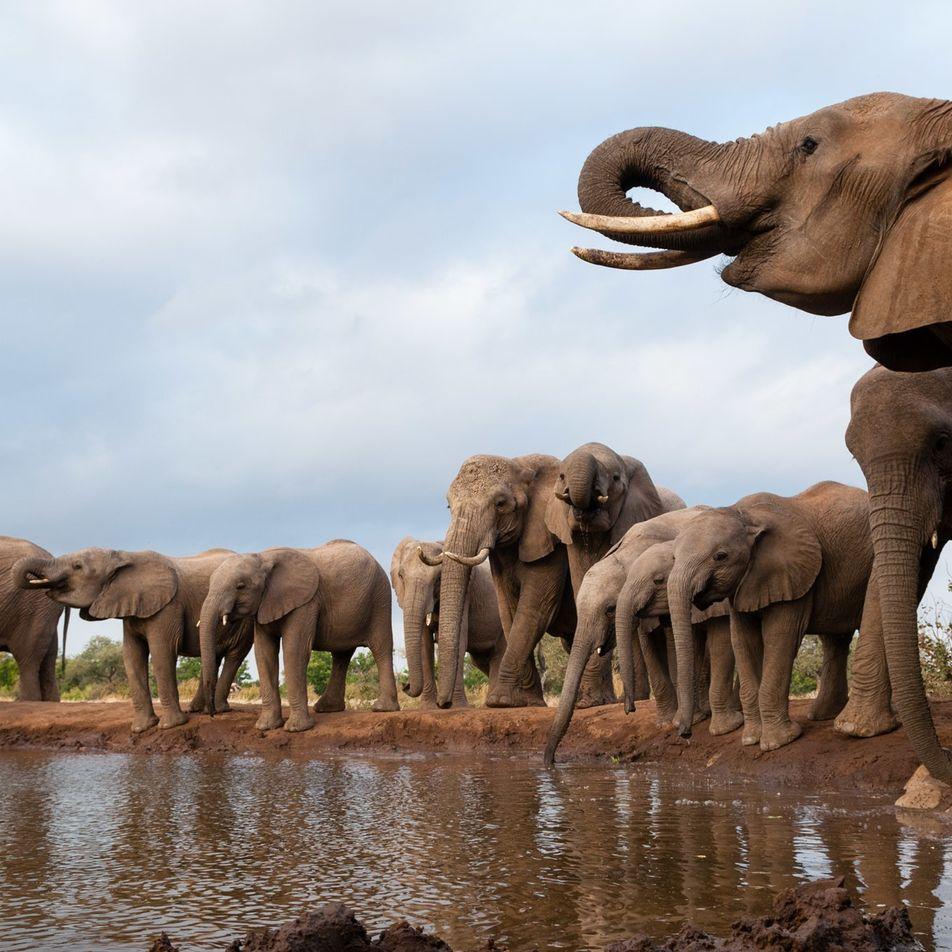 Auf der Suche nach Botswanas mysteriösem Elefantenkiller