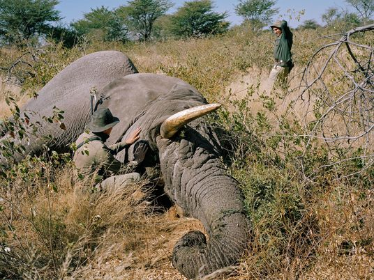 Botswana erlaubt wieder die Jagd auf Elefanten