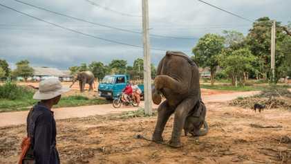 Das Dorf der Elefanten: Zwischen Tradition und Ausbeutung