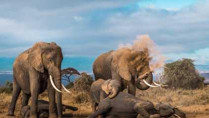 Galerie: 24 Tierfotografien zeigen die Vielfalt unseres Planeten