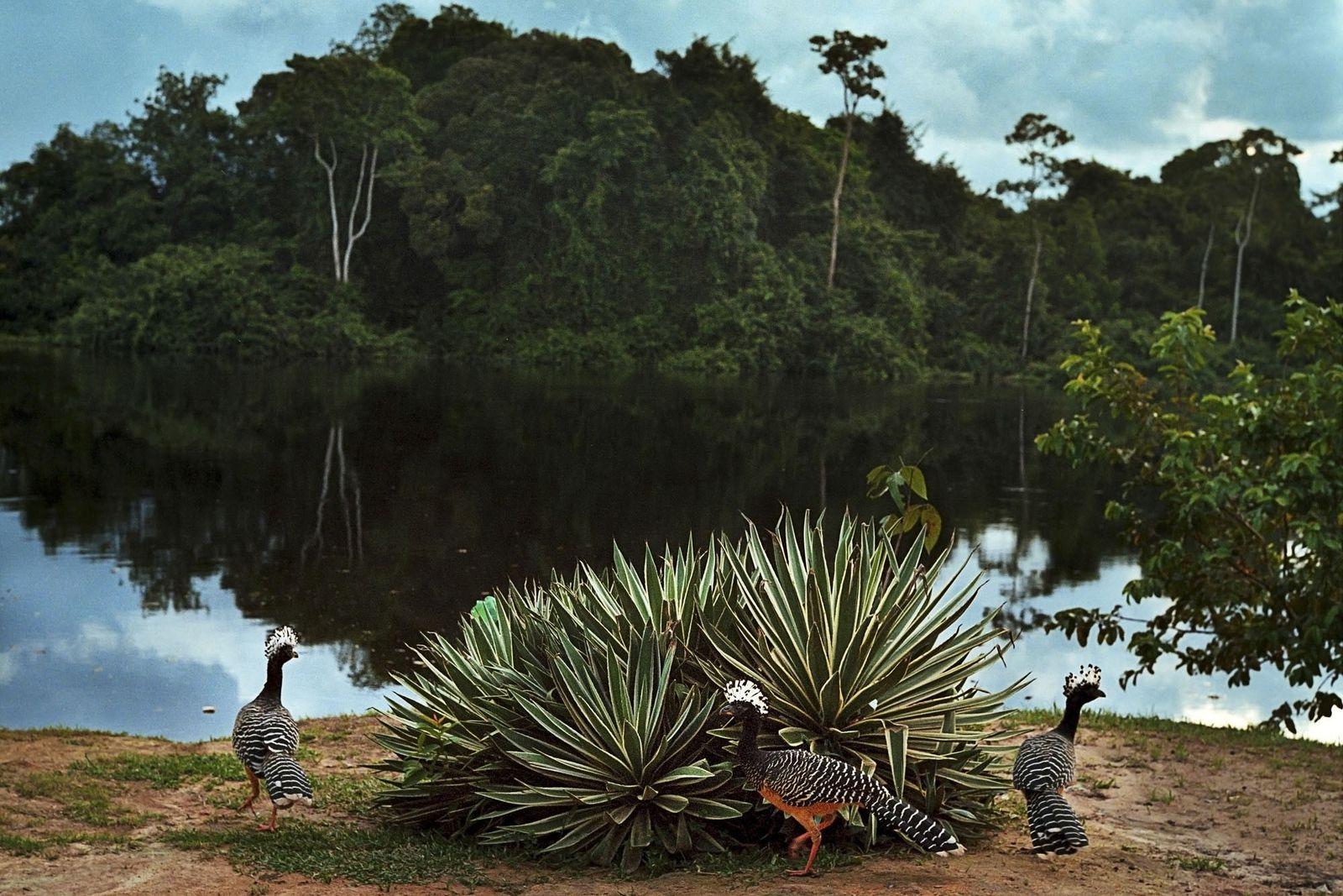 Vögel am Ufer des Rio Novo