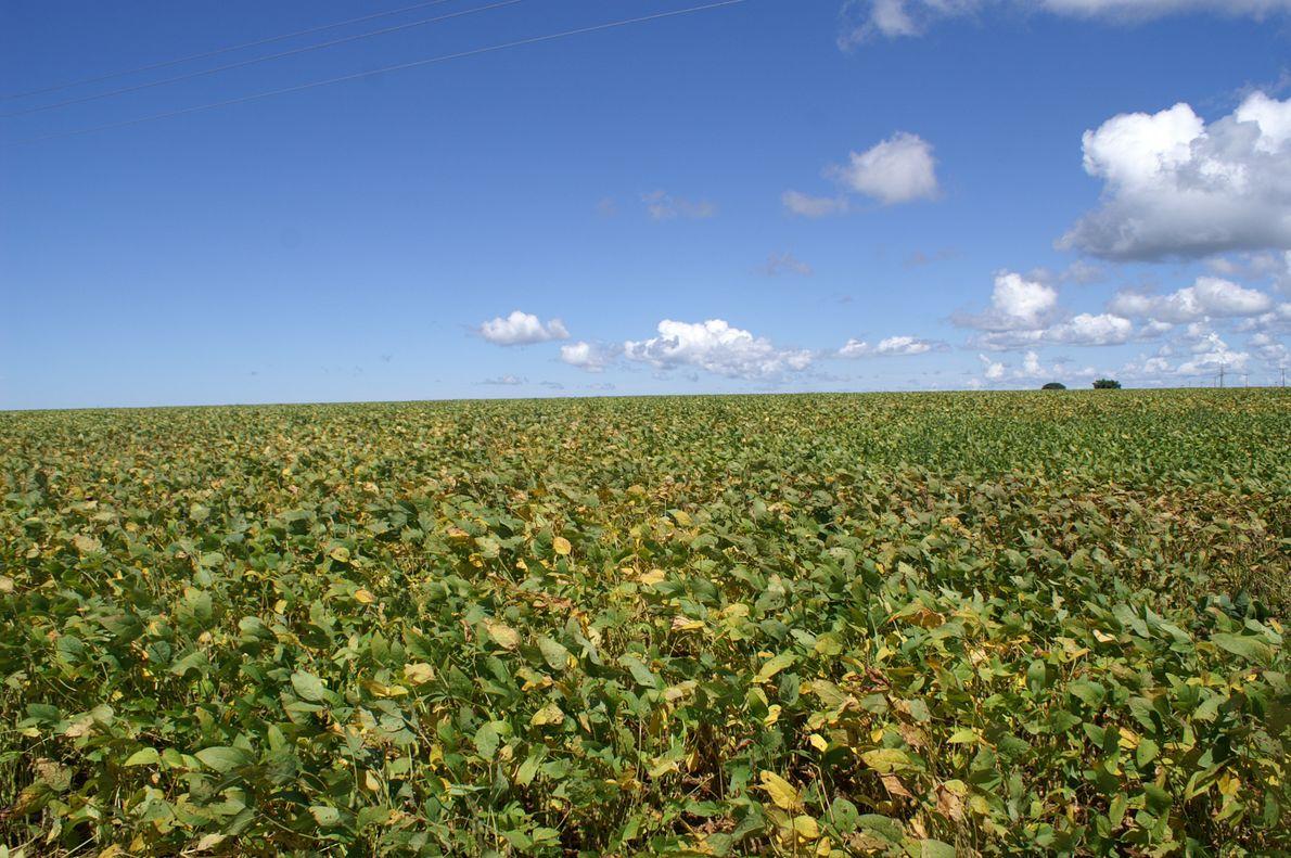 Sojaplantagen Mato Grosso