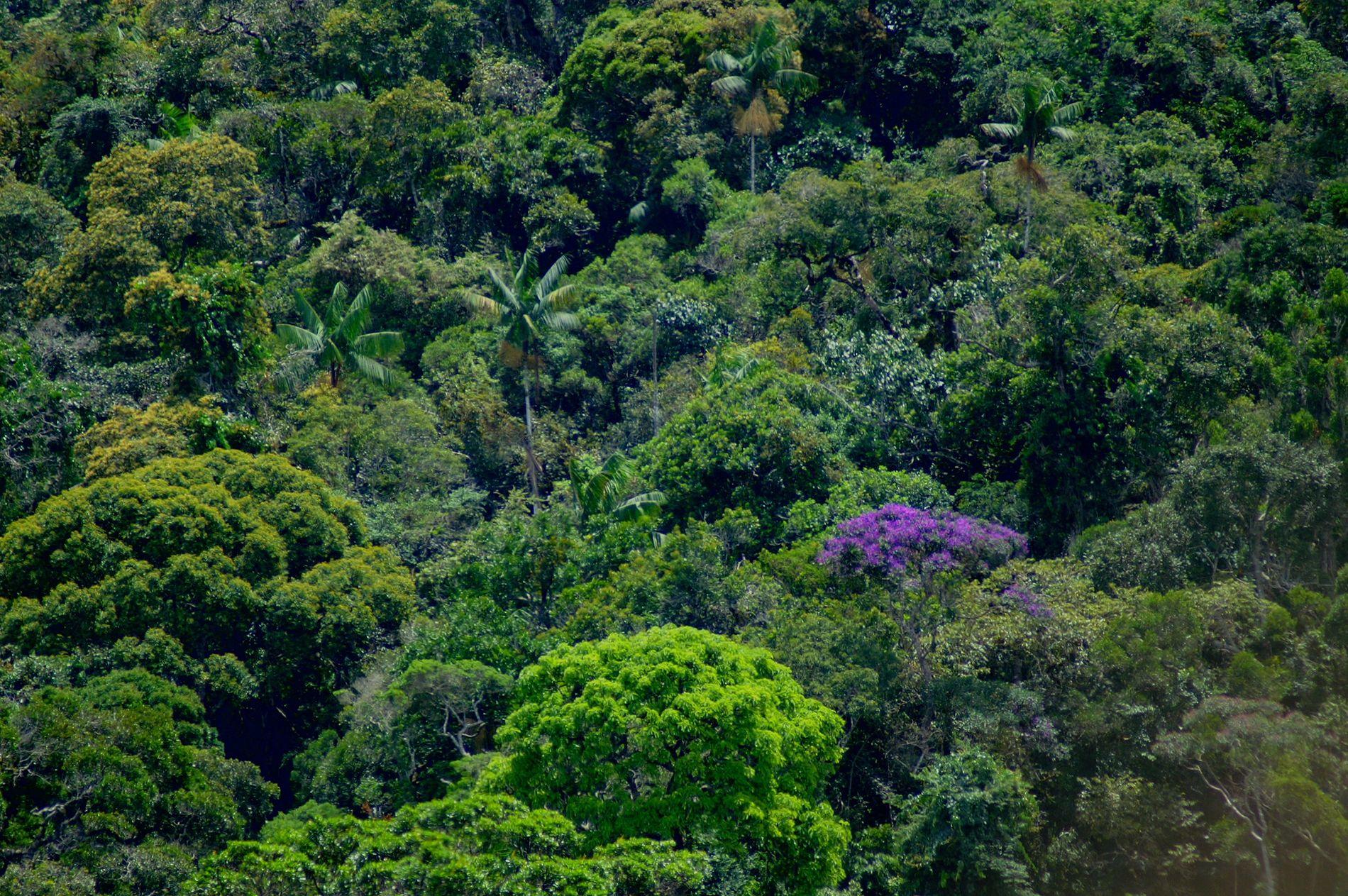 Brasilianischer Küstenregenwald